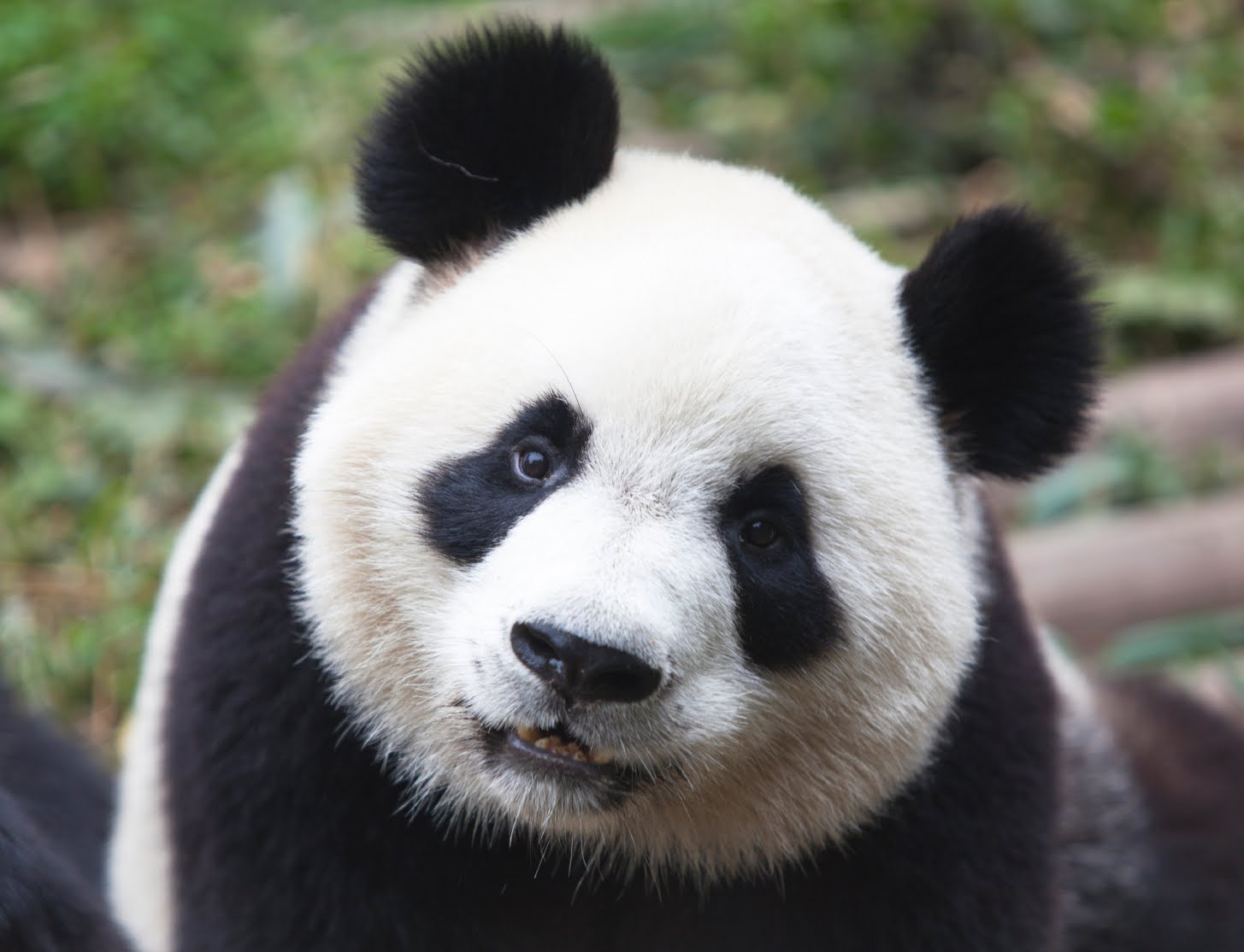 Google Panda Friendly SEO